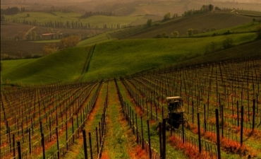 Half day tours from Arezzo